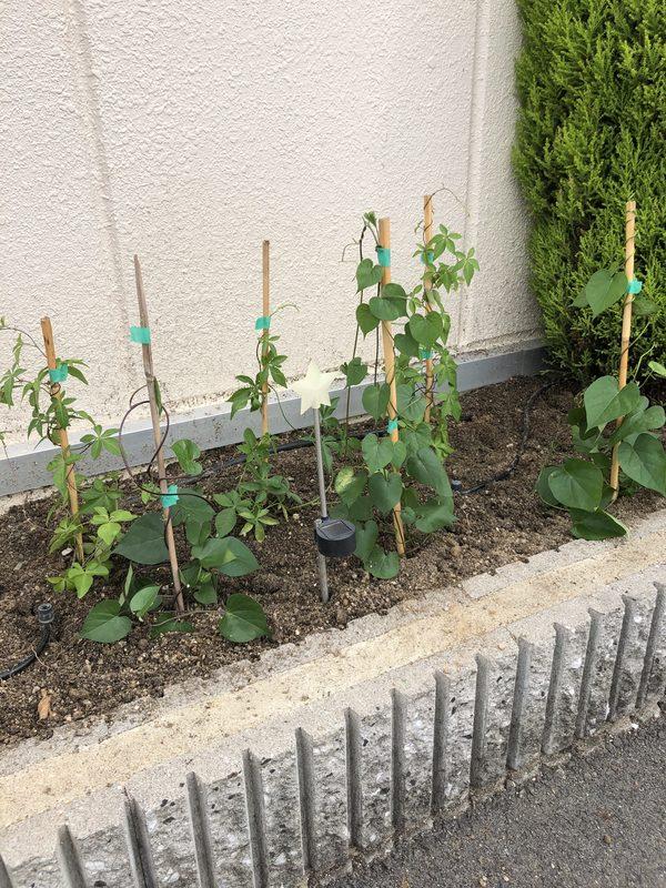 2020/06/28 植栽を植え替えました