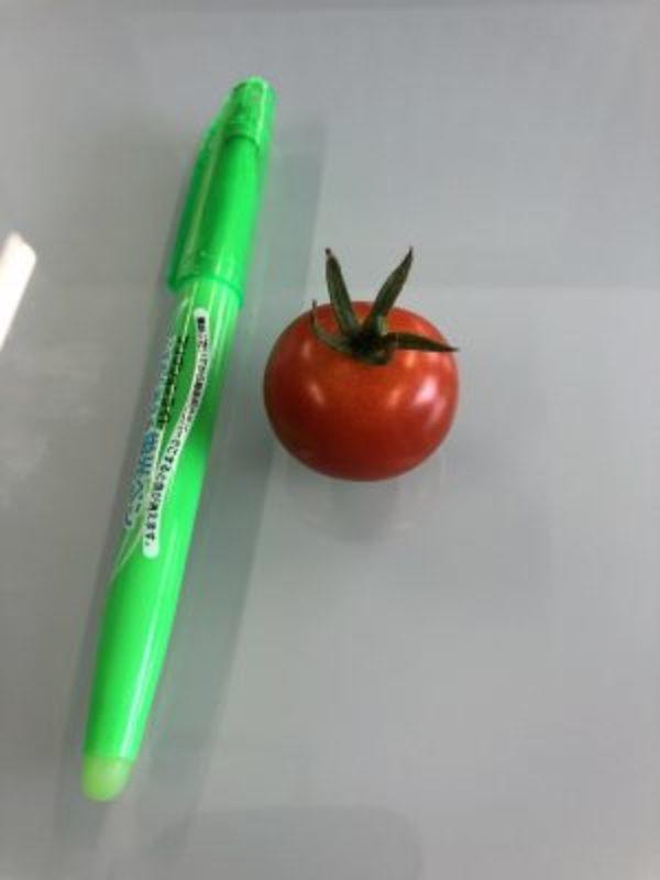 2021/07/15 花壇の野菜が大きく育っています